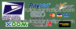 pagos y envios Fruta Planta